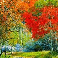 Естественная природа улучшает настроение